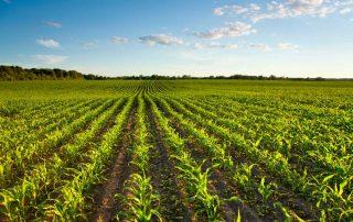 Blog Digitalisierung in der Landwirtschaft (sgiesler)