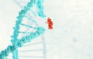 CRISPR Cas_DNA