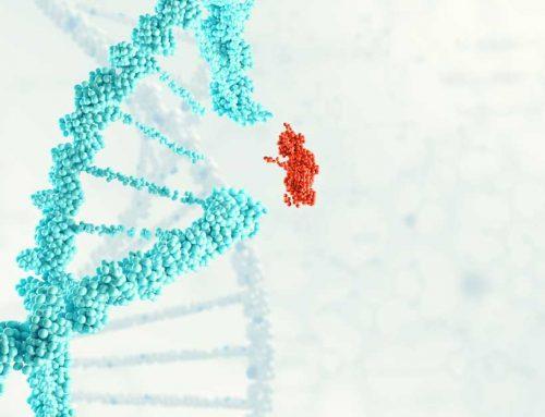 Nobelpreis für Entdeckerinnen der Genschere CRISPR/Cas9 – Was ist das überhaupt?
